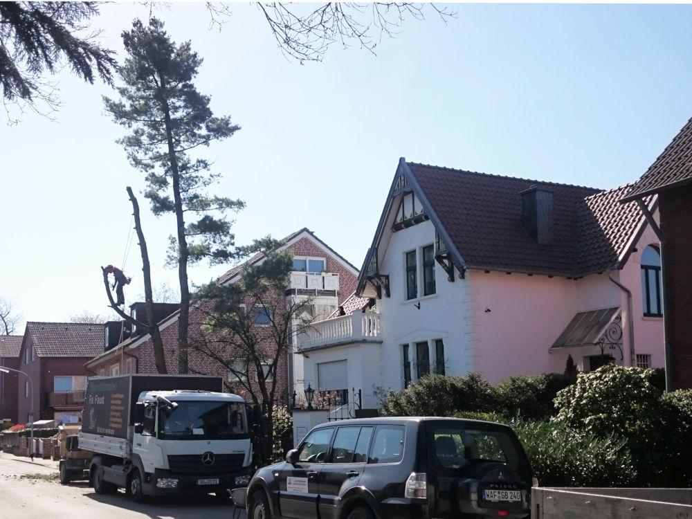 Der Baumkletterer beseitigt auch den letzten Baum auf dieser Straßenseite (1.4.2019); Foto: Klare)