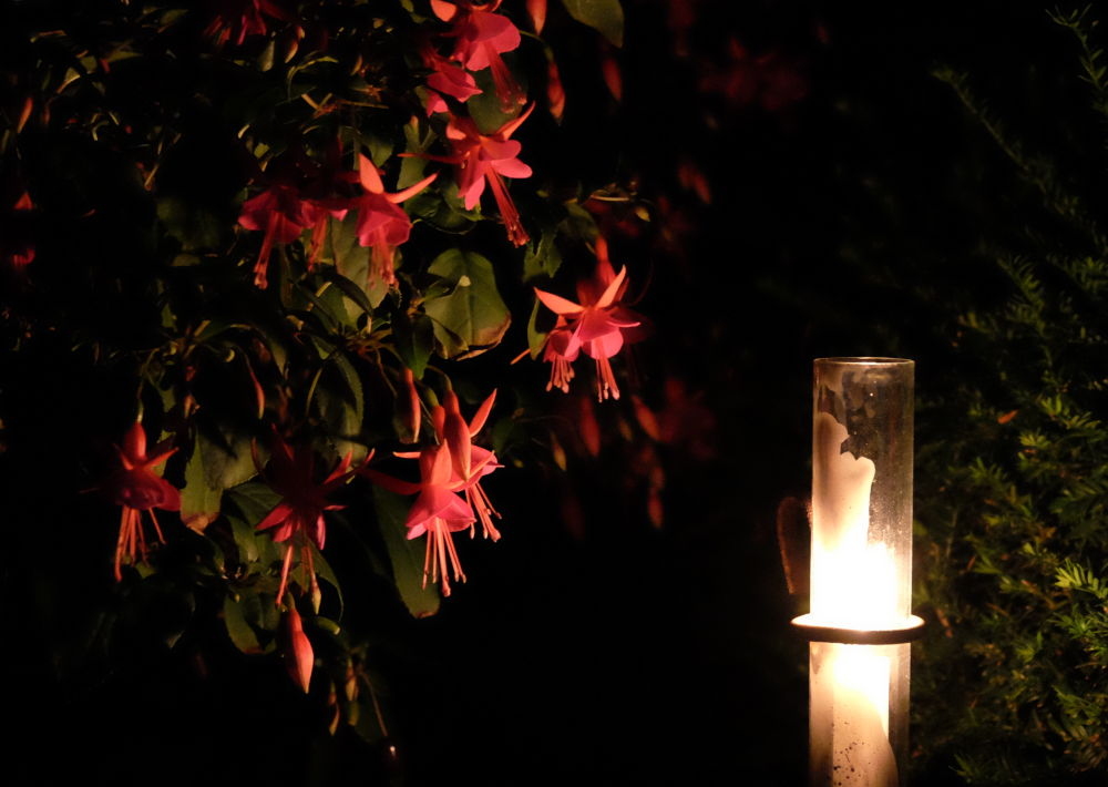 Fuchsie im Kerzenlicht (31.8.2019; Foto: Klare)