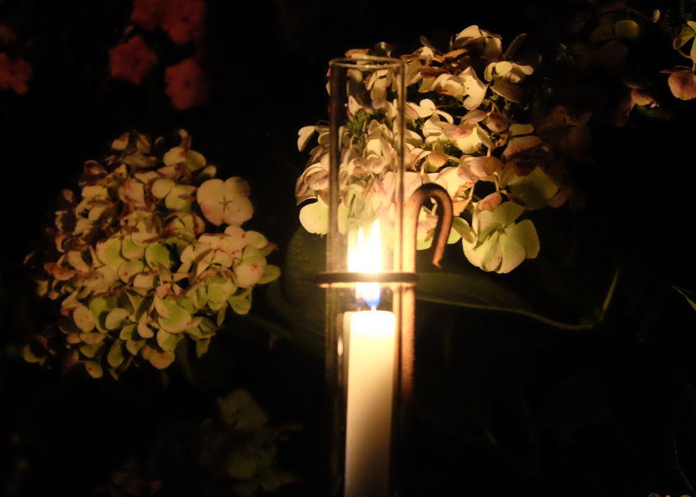 Bei Tage unansehnlich vertrocknet, in der Nacht ein Hingucker: Hortensien (31.8.2019; Foto: Klare)