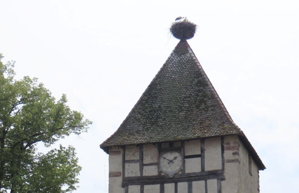 Storchenturm (Schloss Beuggen, 6.7.2019; Foto: Meyerbröker)