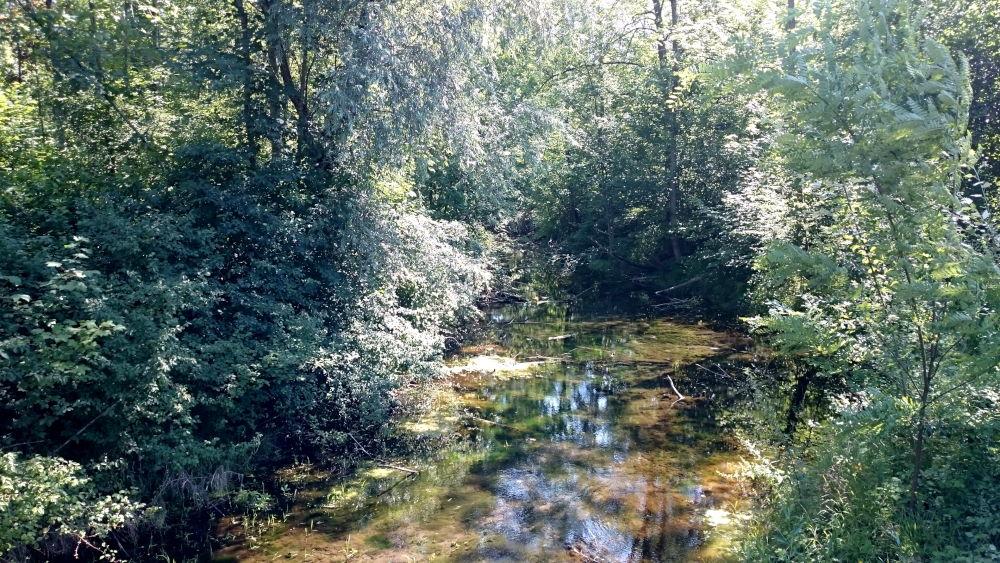 Im Breisacher Wald (9.7.2019; Foto: Klare)