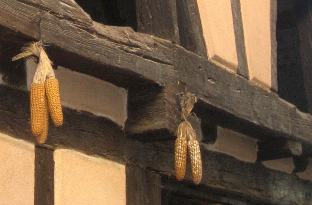 Trockenfrüchte (Eguisheim, 9.7.2019; Foto: Klare)