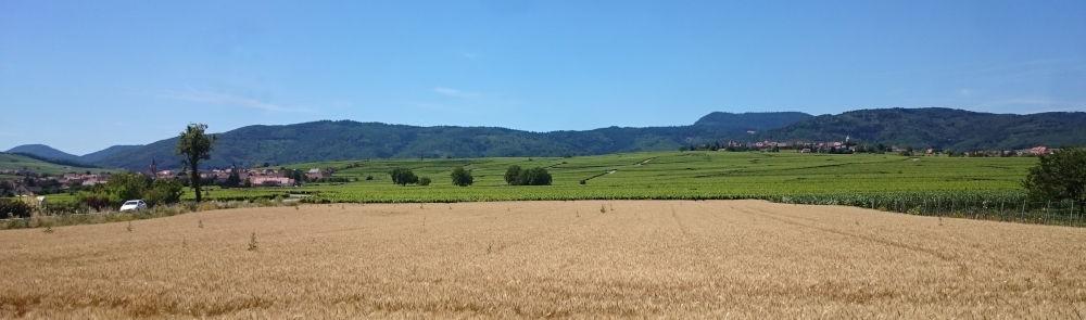 Weizen und Wein (10.7.2019; Foto: Klare)