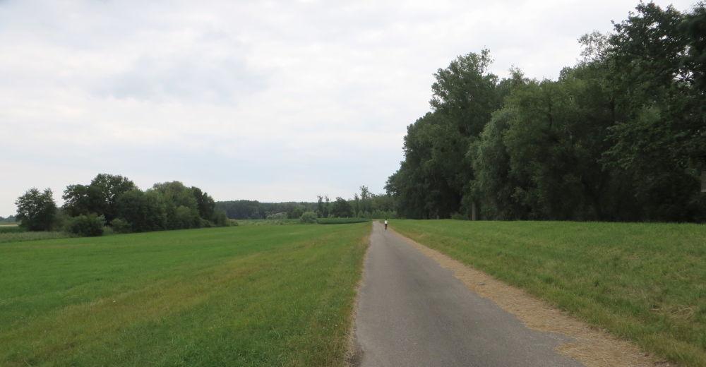 Rhein-Radweg (13.7.2019; Foto: Meyerbröker)