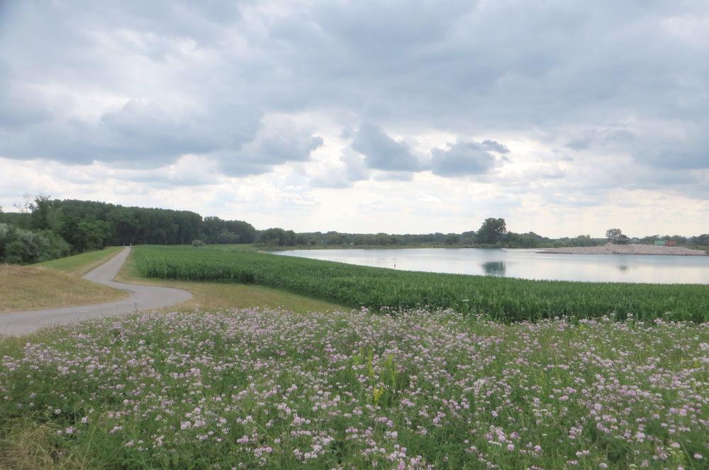 Baggersee und Blüten (13.7.2019; Foto: Meyerbröker)