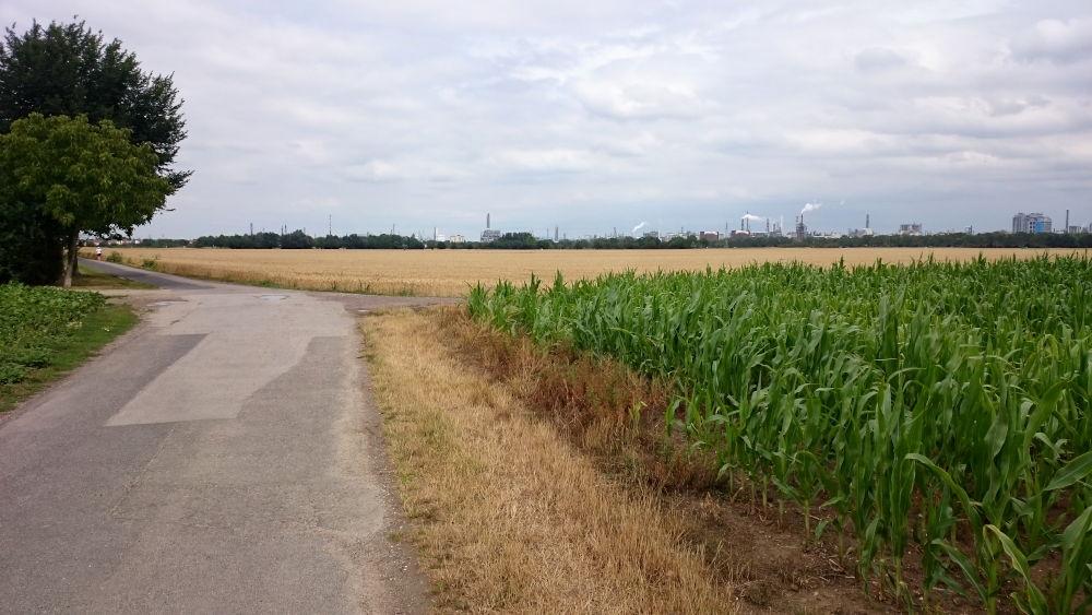Am Horizont die Industrie (bei Ludwigshafen, 14.7.2019; Foto: Klare)
