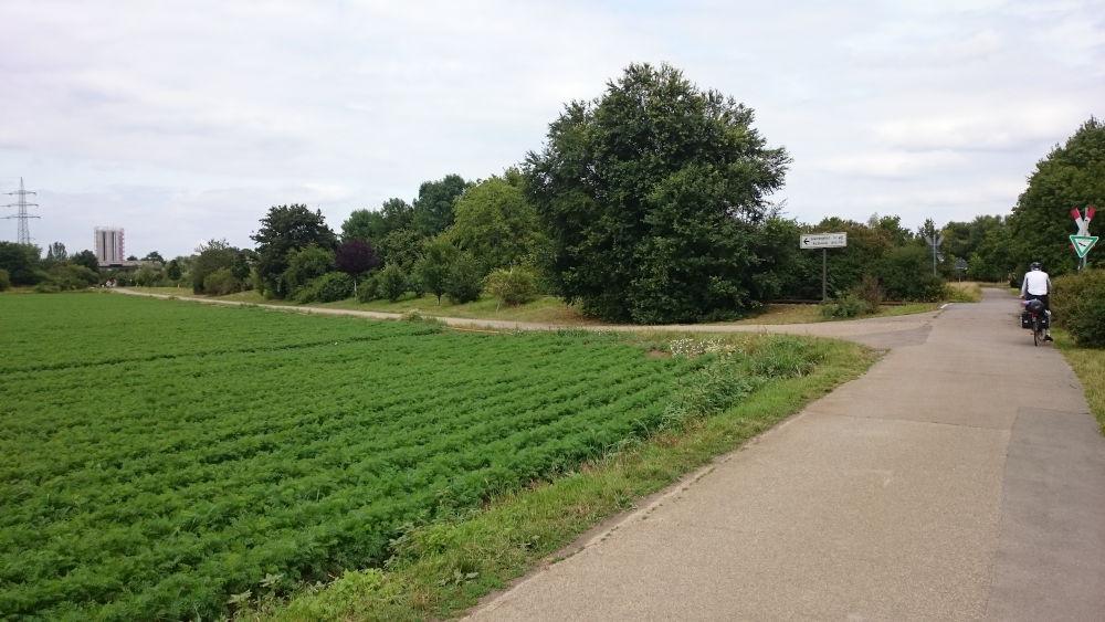 Landschaftsschutzgebiet bei Ludwigshafen (14.7.2019; Foto: Klare)