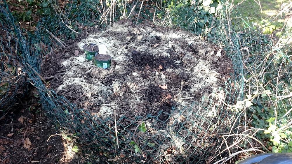 """Die """"Endstation"""": Das Grünzeug ist umgeschichtet, etwas Bentonit und Oscorna zugegeben - jetzt sind die Würmer dran (23.3.2020; Foto: Klare)"""