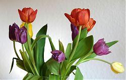Tulpen auf dem Ostertisch (12.4.2020; Foto: Klare)