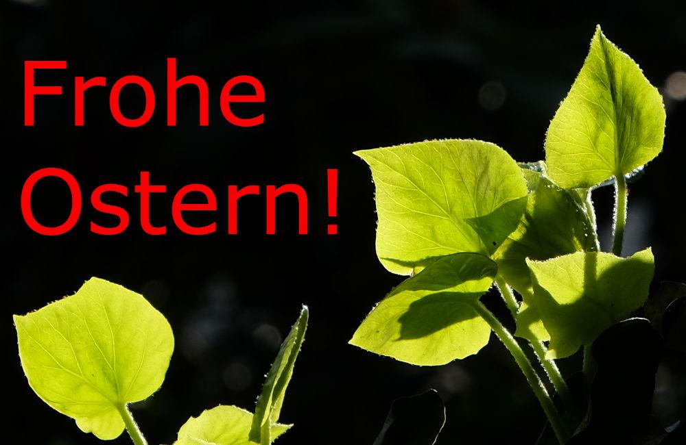 Frohe Ostern! (12.4.2020; Foto: Klare)