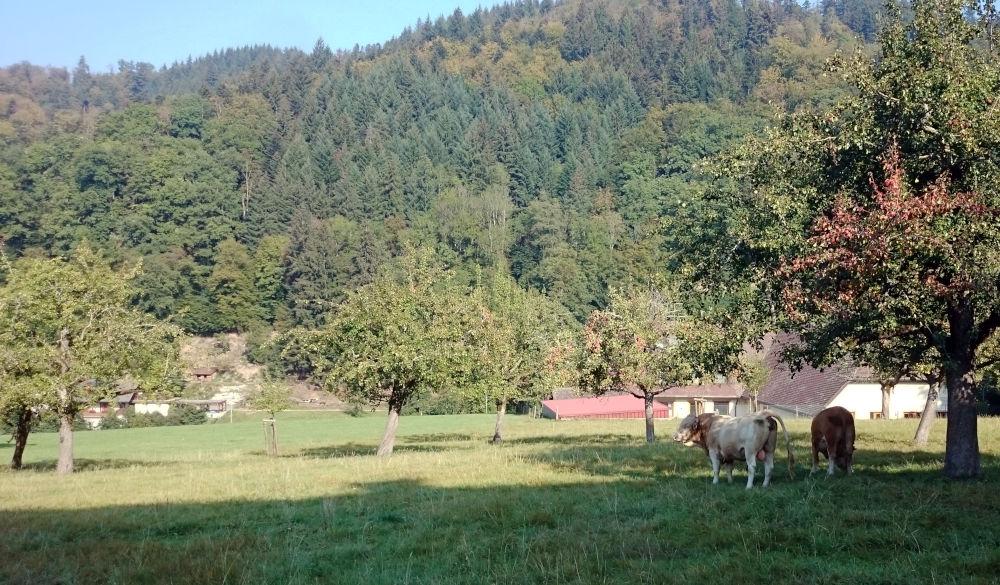 Münstertal unterhalb St. Trudpert (17.9.2020; Foto: Henning Klare)