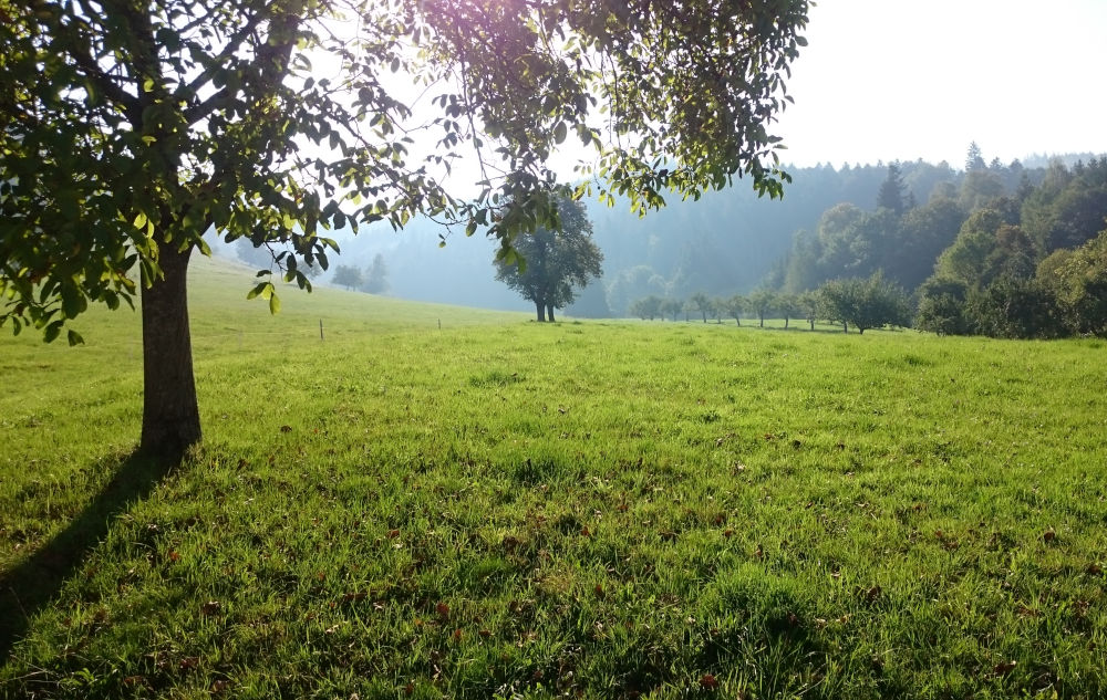 Münstertal bei St. Trudpert (17.9.2020; Foto: Henning Klare)