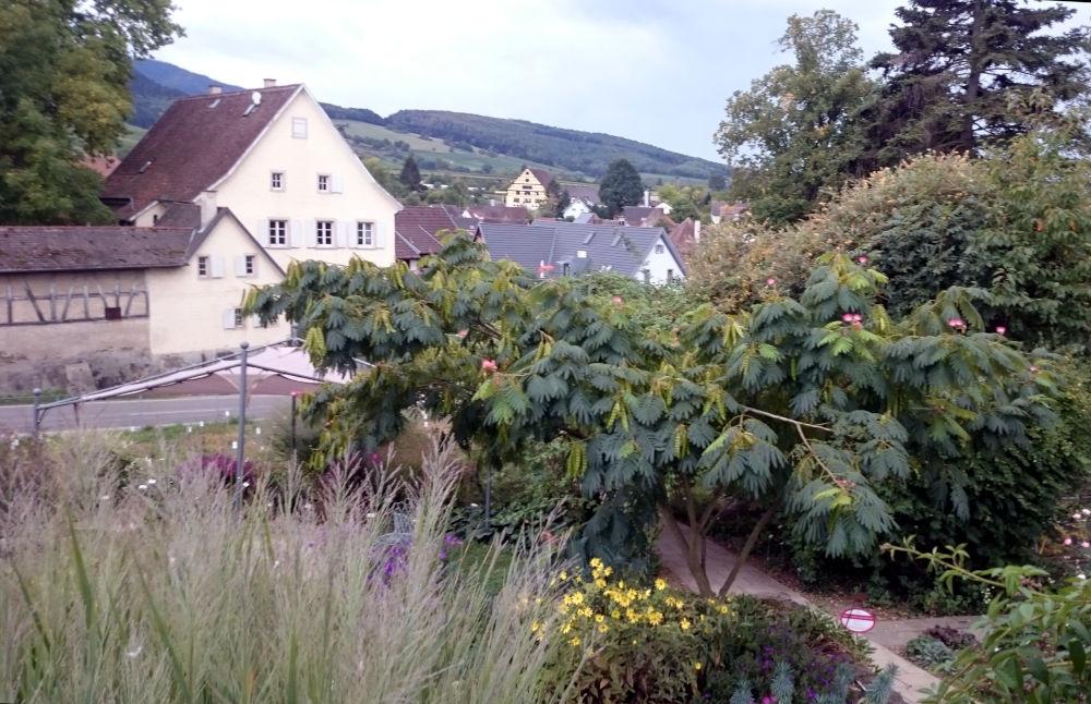 Zum Kaffee in der Staudengärtnerei Laufen (24.9.2020; Foto: Henning Klare)