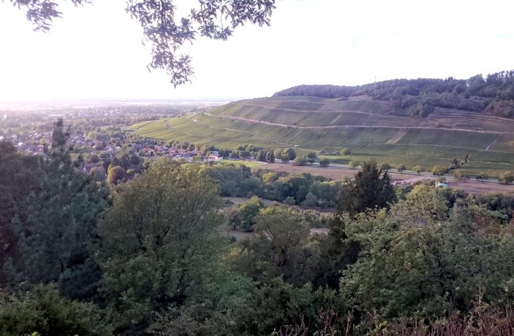 Blick vom Badenweiler Burgberg auf den Römerberg (25.9.2020; Foto: Henning Klare)
