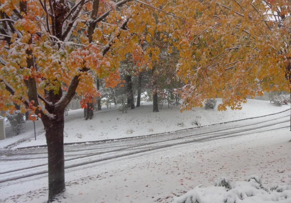 Buntes Laub und Schnee (Boston, 30.10.2020)