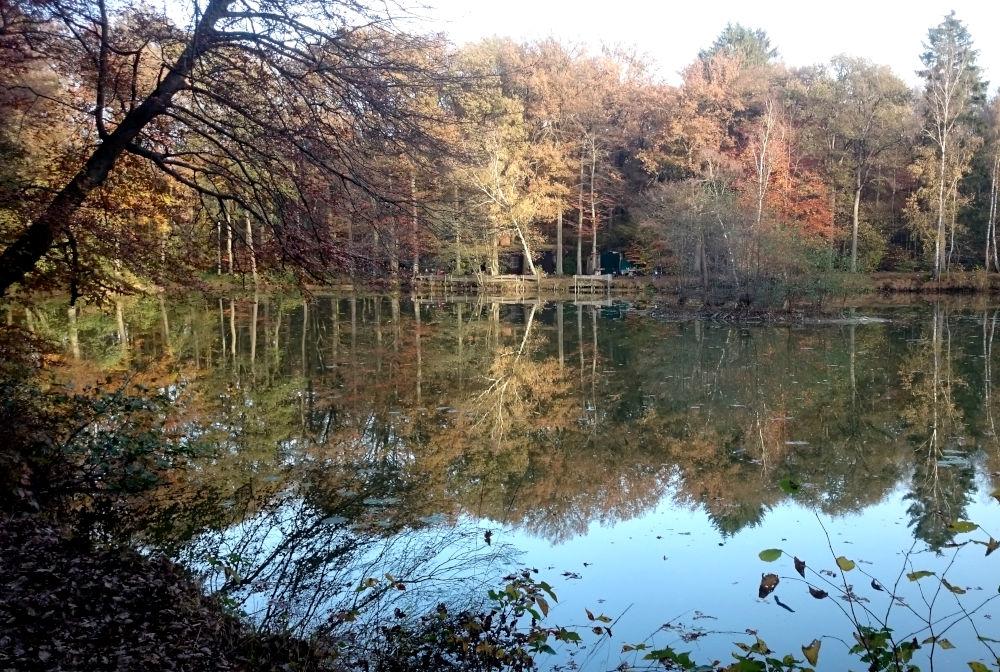 See in der Davert (8.11.2020; Foto: Henning Klare)