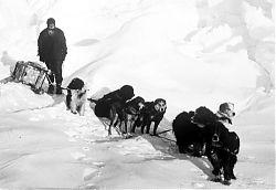 Ein beliebtes Literaturthema: Der einsame Mann im Schnee und die Wölfe (Foto: James Francis Hurley, Hundeschlitten der Endurance-Expedition 1915)