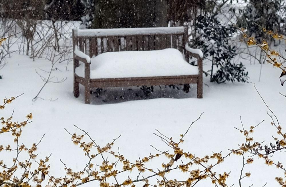 Ein ruhiger Platz im stillen Garten, verborgen hinter der Zaubernuss (8.2.2021; Foto: Henning Klare)
