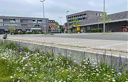 Blümchen und Ödnis: Parkplatz am Wiewel-Supermarkt (6.6.2021; Foto: Henning Klare)