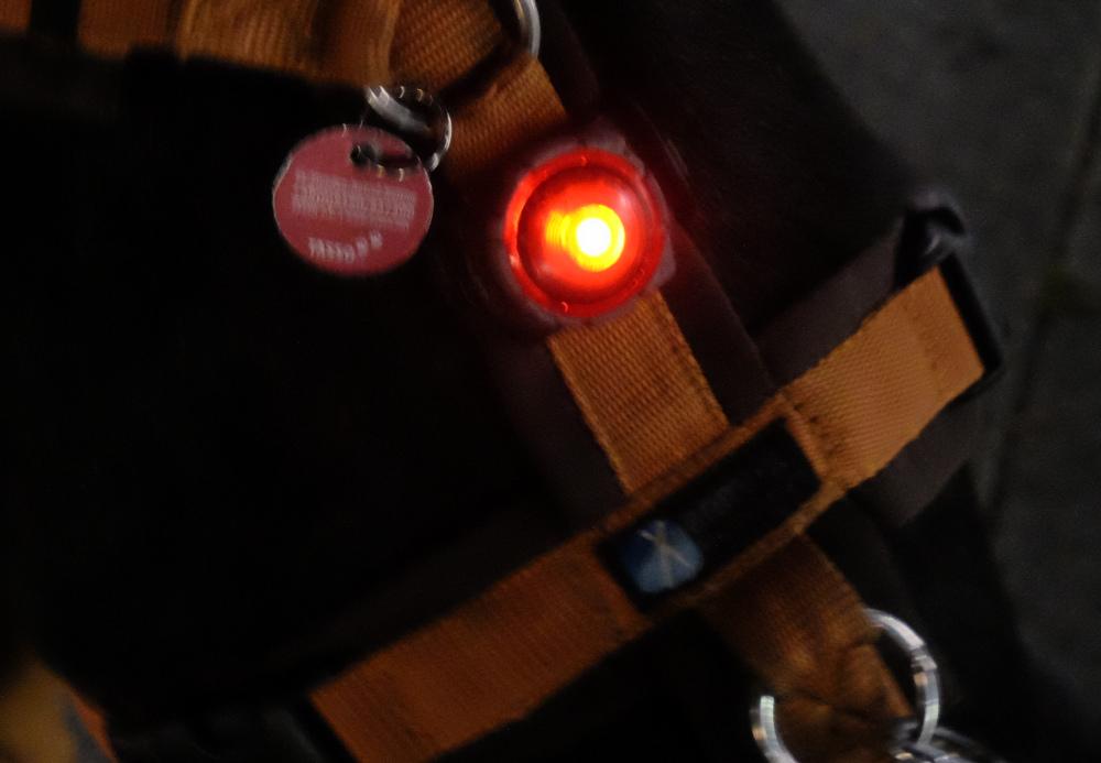 Auch am Hundegeschirr leuchtet's (1.10.2021; Foto: Henning Klare)
