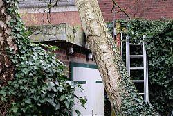 Baum küsst Garage: Sturmtief Friederike macht's möglich (19.1.2018; Foto: Klare)
