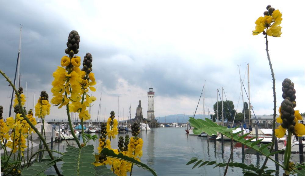 Lindau: Blumen am Hafen (22.7.2018; Foto: Meyerbröker)