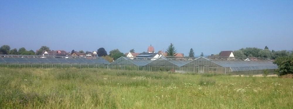 Reichenau: Großflächiger Gemüsebau unter Glas (24.7.2018; Foto: Klare)