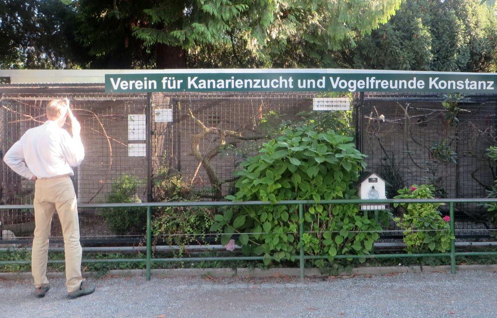 Konstanz: Kanarien am See (24.7.2018; Foto: Meyerbröker)